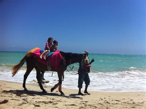 horse riding sea camel rides vacation beach