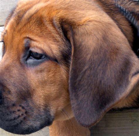 tiere jetzt kommt die pille fuer depressive hunde welt