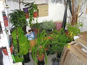 Hortensien überwintern Im Keller : pflanzen in den keller einr umen teil 2 majas pflanzenblog ~ Lizthompson.info Haus und Dekorationen