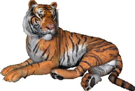 tigers animated images gifs pictures animations