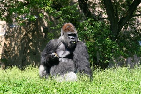 zookeeper salary duties