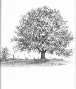 Old Oak Tree Clip Art | Oak Tree Online Drawing Pictures ...