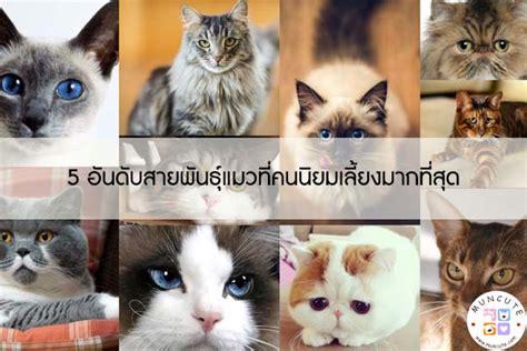 5 อันดับสายพันธุ์แมวที่คนนิยมเลี้ยงมากที่สุด l ทาสแมว ...