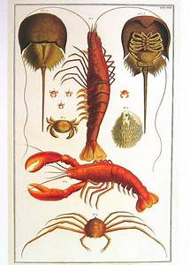29 best Project: Rock Lobster images on Pinterest | Rock ...