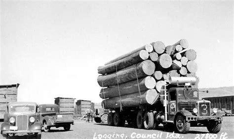 logging  images  pinterest forests