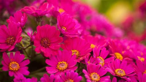 pink flowers names and pictures flower wallpaper