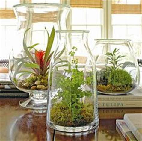 containers for kitchen cabinets 42 best beautiful indoor plants images on in 5683