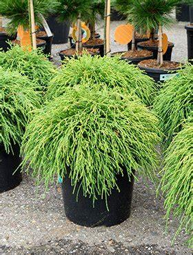 Balkonpflanzen Sehr Sonnig by Balkonpflanzen Sehr Sonnig Welche Balkonpflanzen F R