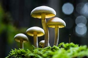 These Photos Of Mushrooms Will Make You Feel Like You U0026 39 Re