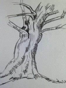 Comment Creuser Un Tronc D Arbre : comment dessiner un tronc d arbre r aliste en 3 tapes art express ~ Melissatoandfro.com Idées de Décoration