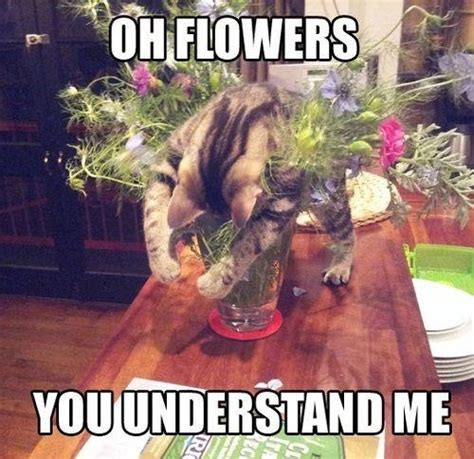 Flower Meme - cat meme flowers flower memes pinterest cat memes meme and cat
