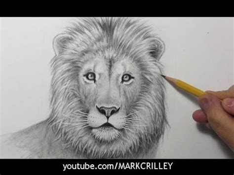 draw  lion narrated step  step youtube
