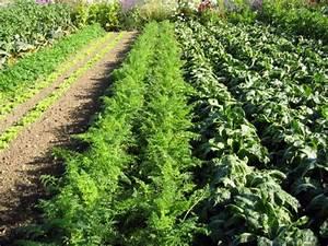 Plantes Amies Et Ennemies Au Potager : fiches jardinage du potager ~ Melissatoandfro.com Idées de Décoration
