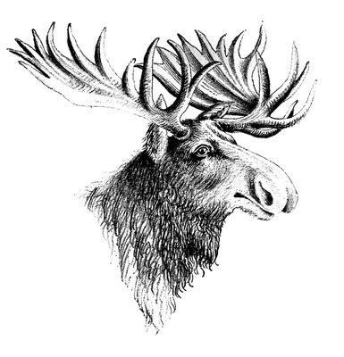 vintage clip art moose  graphics fairy