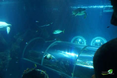 foto galerien sea life konstanz freizeitpark weltde