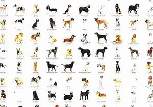 List Of Dog Breeds - Dog Breed Chart