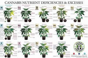 Marijuana Fertilizer Ingredients