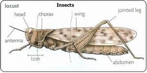 6 Phylum Arthropods
