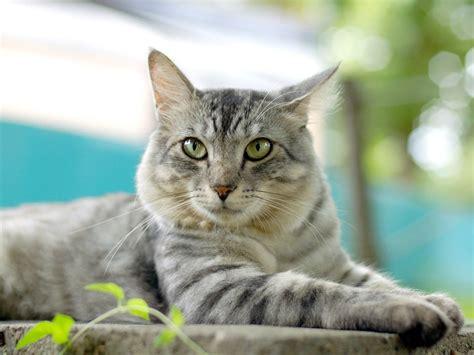 Pets3000com  Pet Supplies Cats Your Pet Cat