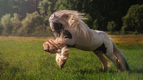 Hours Animal Wallpaper - wallpapers horses run grass animals 1920x1080