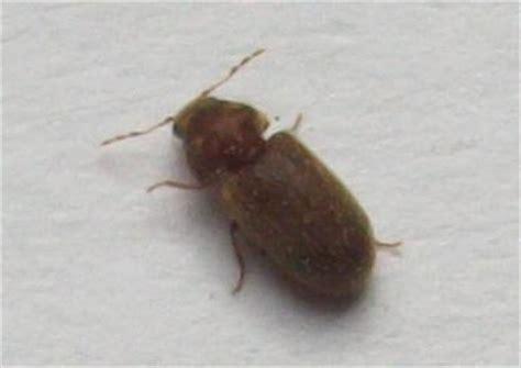 insecte inconnu dans ma cuisine