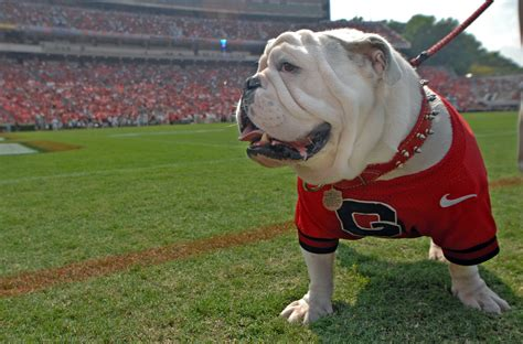 Uga Site by Update Uga Vii S Comes As Family Says