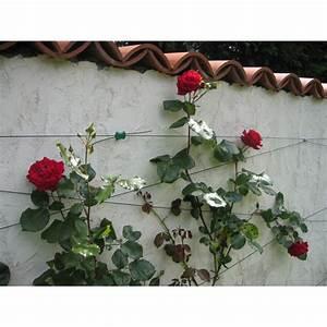 Treillis Pour Plantes Grimpantes : kit treillis pour plantes grimpantes ~ Premium-room.com Idées de Décoration