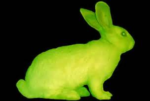 Le Fluorescente by 4 30pm Thinking About Fluorescent Bunnies Andrew