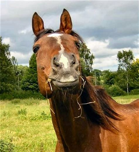 horse cute horses feed hay eating really animals funny face pony lucerne smile alpaca most happy tumbleroot horsey very chaff