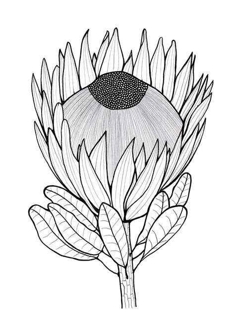 glorious protea flowers  color allfreeholidaycraftscom