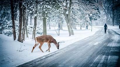 Snow Winter Deer Nature Trees Landscape Path