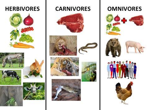 Herbivores,carnivores And Omnivores