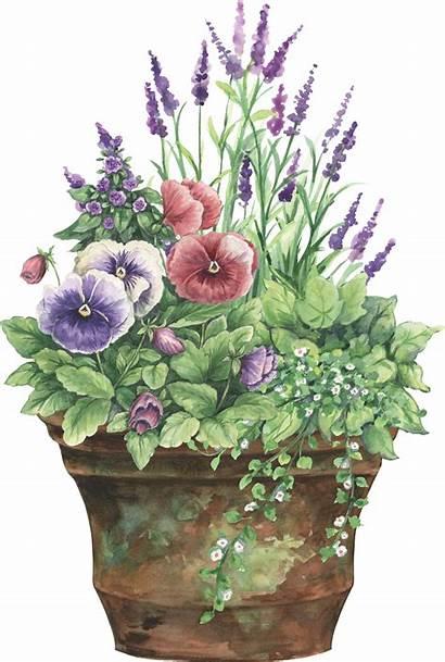 Clipart Planter Flower Pot Garden Floral Flowers