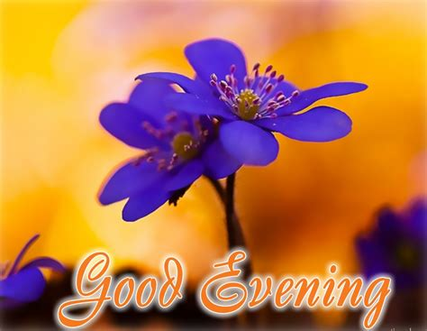 Evening Animated Wallpaper - evening flowers wallpapers gallery