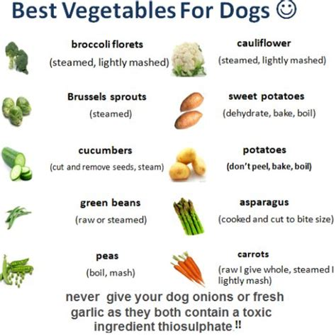 table food for dogs best vegetables for dogs man 39 s best friend pinterest