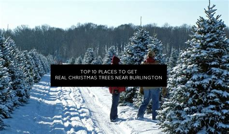 top 10 places near burlington to get a real christmas tree momstown burlington