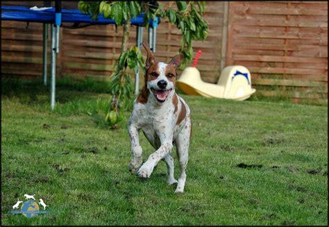 Hund Und Mensch  Mit Diesen Tipps Wird Der Garten Zum