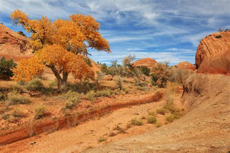 Usa Pars Sky Utah Trees Sand Nature Desert