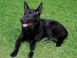 canadian-dog-land-mine-afghanistan | Dog Puppy Behavior ...
