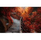 Nature Landscape River Forest Fall Walkway Path Trees