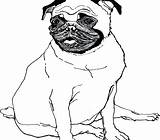 Puppy Pug Realistic Coloring Pages Cute Outline Drawing Printable Clipartmag Getdrawings Sheets sketch template