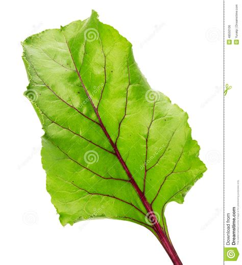 cuisiner les feuilles de radis cuisiner les feuilles de betteraves rouges 56 images
