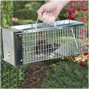37 Best Images About Havahart U00ae Live Animal Traps On