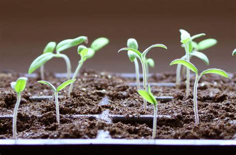 starting seedlings seed starting faqs how to start seeds