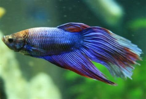 types  fish species  world