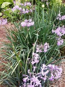 Guide To Growing Spring Onions