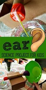 Ear Anatomy Science Project Www123homeschool4mecom