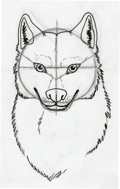 tuto comment dessiner un loup 2