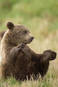 750 best Grizzly Bears images on Pinterest | Wild animals ...
