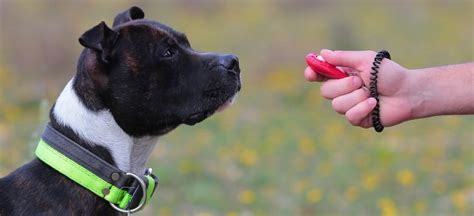 clicker fuer das richtige clicker training mit dem hund
